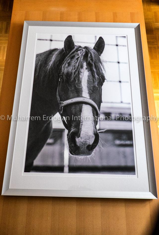 Print A1 59,4 cm x 84,1 cm Epson Hot Press Bright